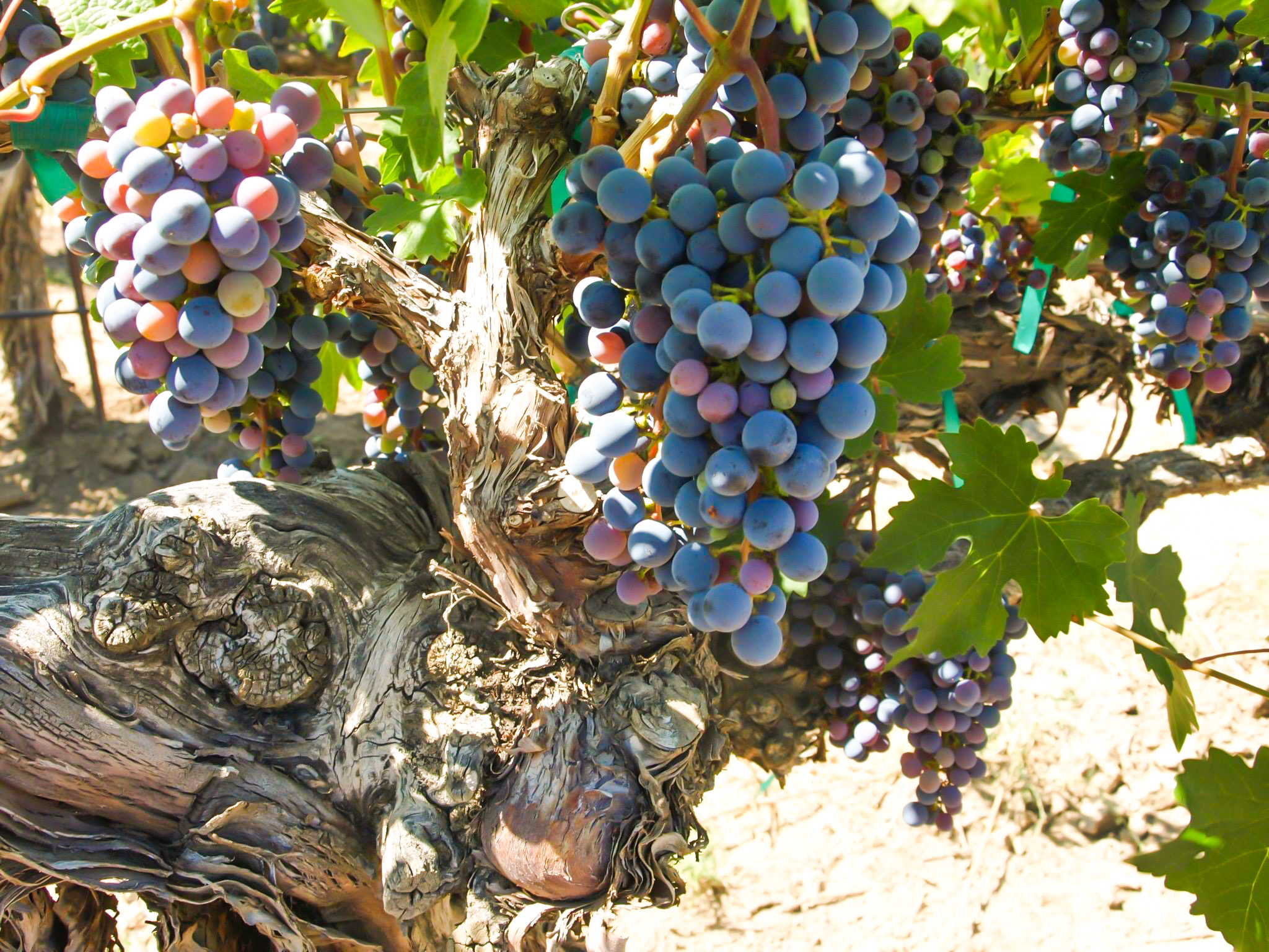 Spokane Wine Club | Barrister Winery Cabernet Sauvignon